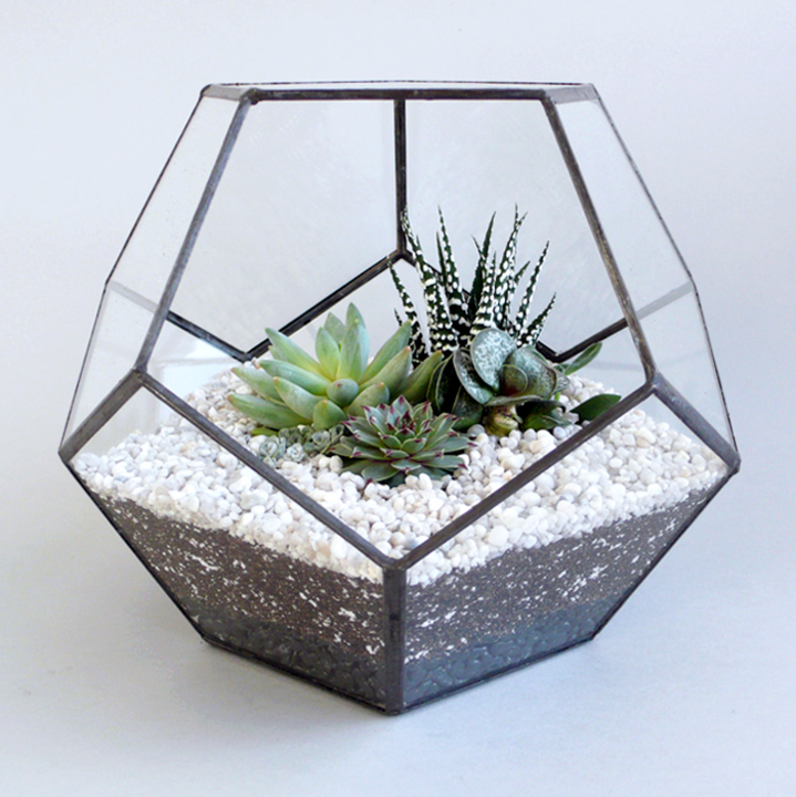 photo of a Geometric Glass Terrarium